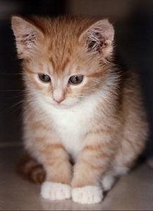 kucing 2