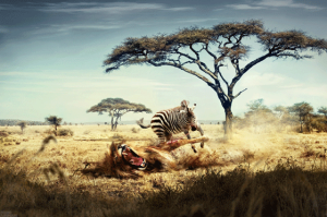 lion-and-zebra