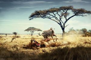 lion-and-zebra